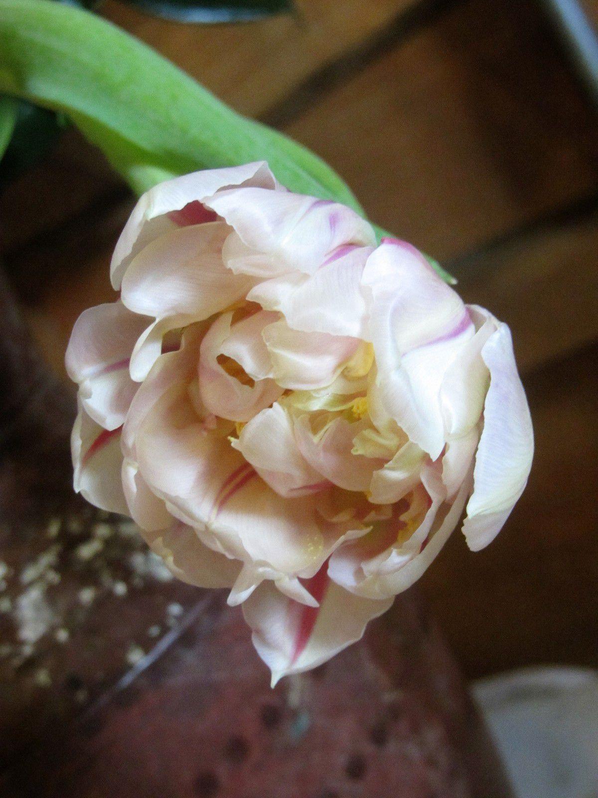 Voilà,  c'est tout . Je ne suis pas là pour vous faire un cour de botanique.. juste pour partager avec vous quelques clichès de fleurs, cueillis dans les allèes de Peter Ham nurseries.