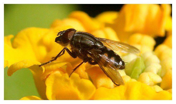 Hyères (83) : parc Sainte Claire, octobre 2013, insectes et autres