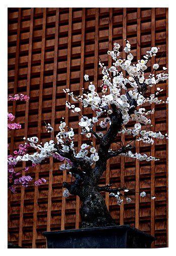 février 2013 : Tokyo, sanctuaire Yushima Tenji