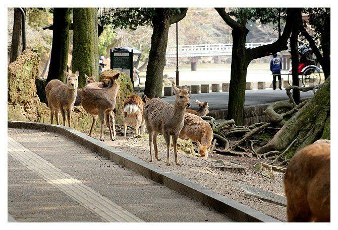 février 2013 : Nara