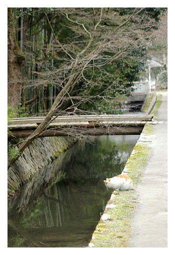 février 2013 : Kyoto, Le Chemin du Philosophe