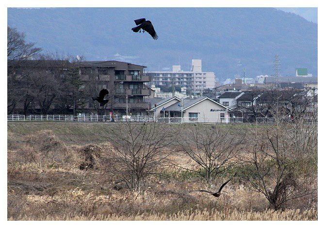 février 2013 : Kyoto, Arashiyama rivière Hozu-gawa