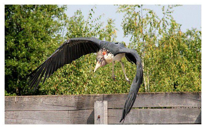 Parc aux oiseaux ; Villars les Dombes (01)