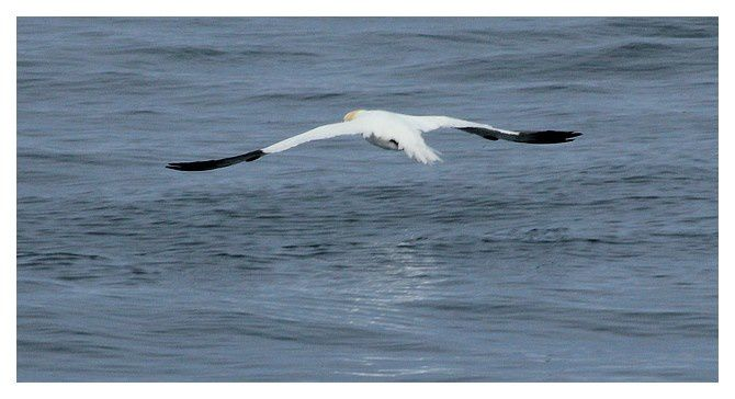 Les 7 îles - côtes d'Armor (22) - faune