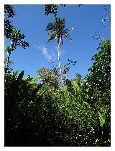 Costa-Rica : jour 3 : Tortuguero
