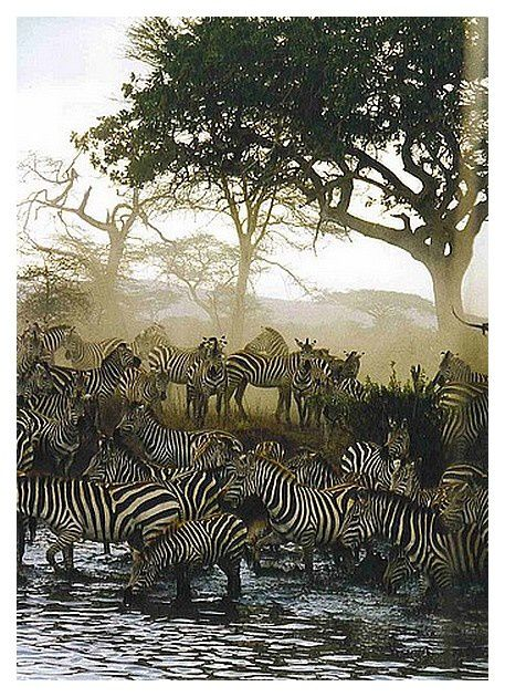 Faune de Tanzanie : Mammifères : février 2000