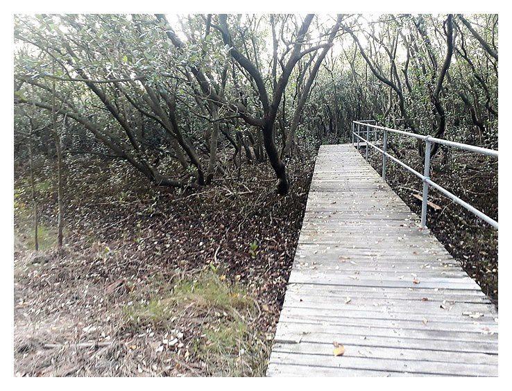 un petit passage dans la mangrove, sentier bien aménagé