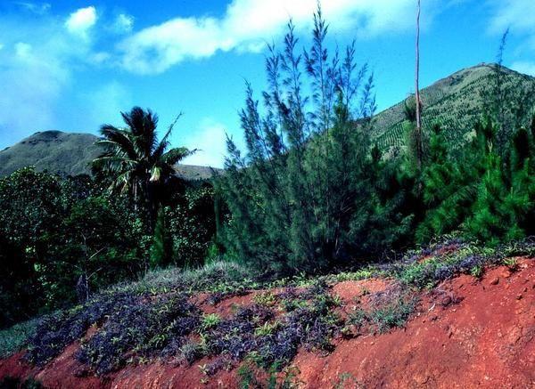 """Répertoire""  Îles Australes, Polynésie française, Tubuai, Rurutu, années 1980, photos by GeoMar006.exe"