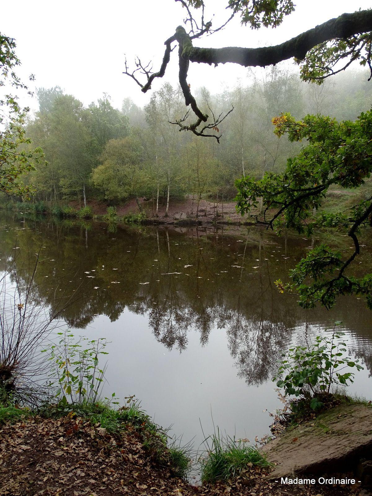 Brocéliande dans la brume