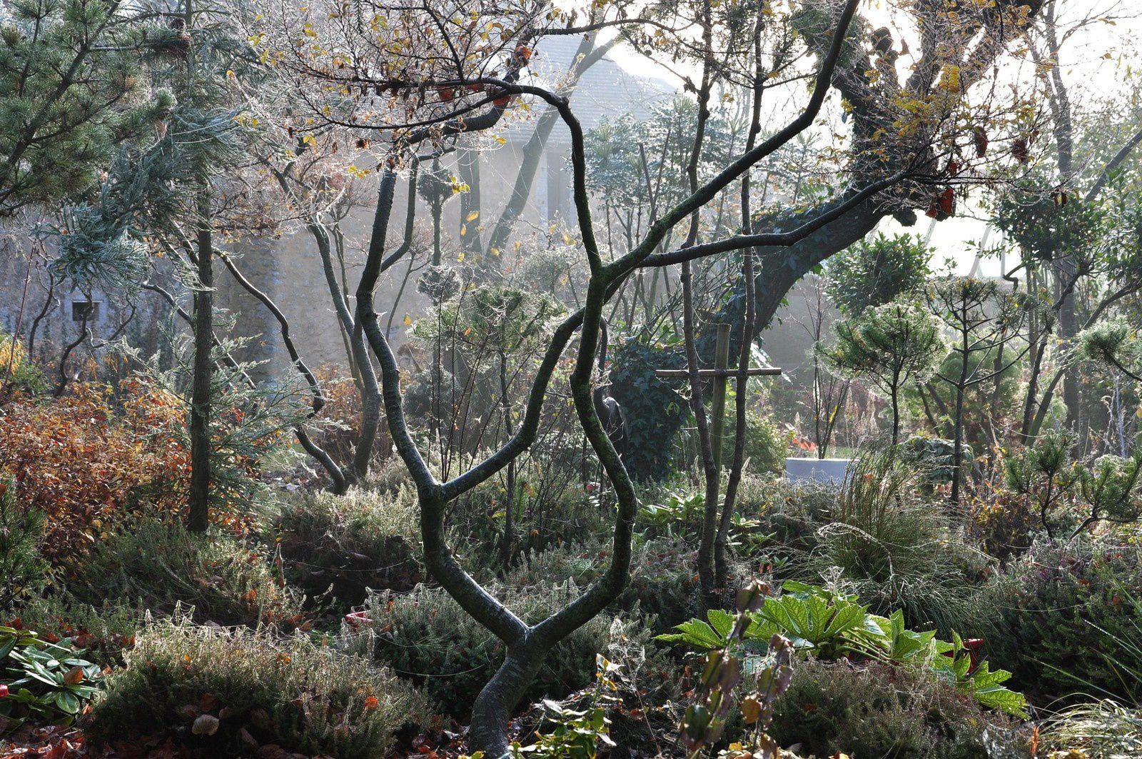 Le jardin s'embrume