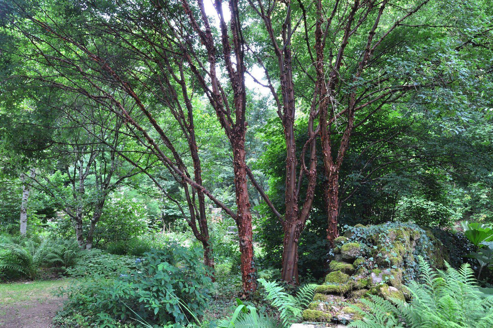 La magie de l'arboretum de la Sédelle