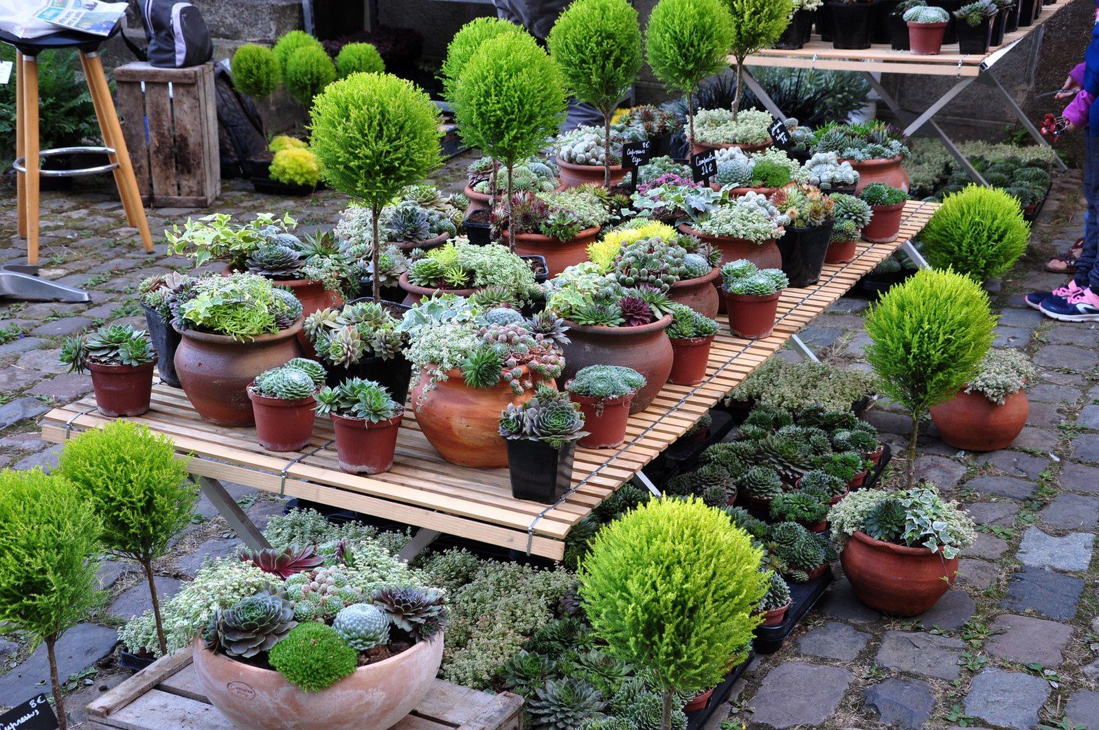 """Quand """"Entre Cours et jardins"""", on accourt"""