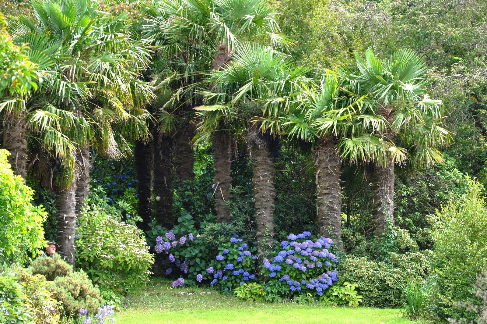Le jardin d'une botaniste passionnée et passionnante, le jardin de Marie-Thérèse