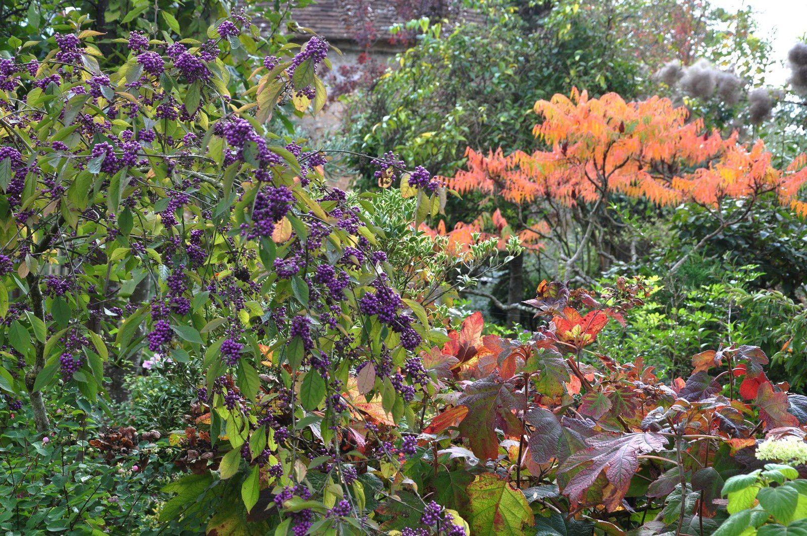 Quand l'automne met son grain de couleur
