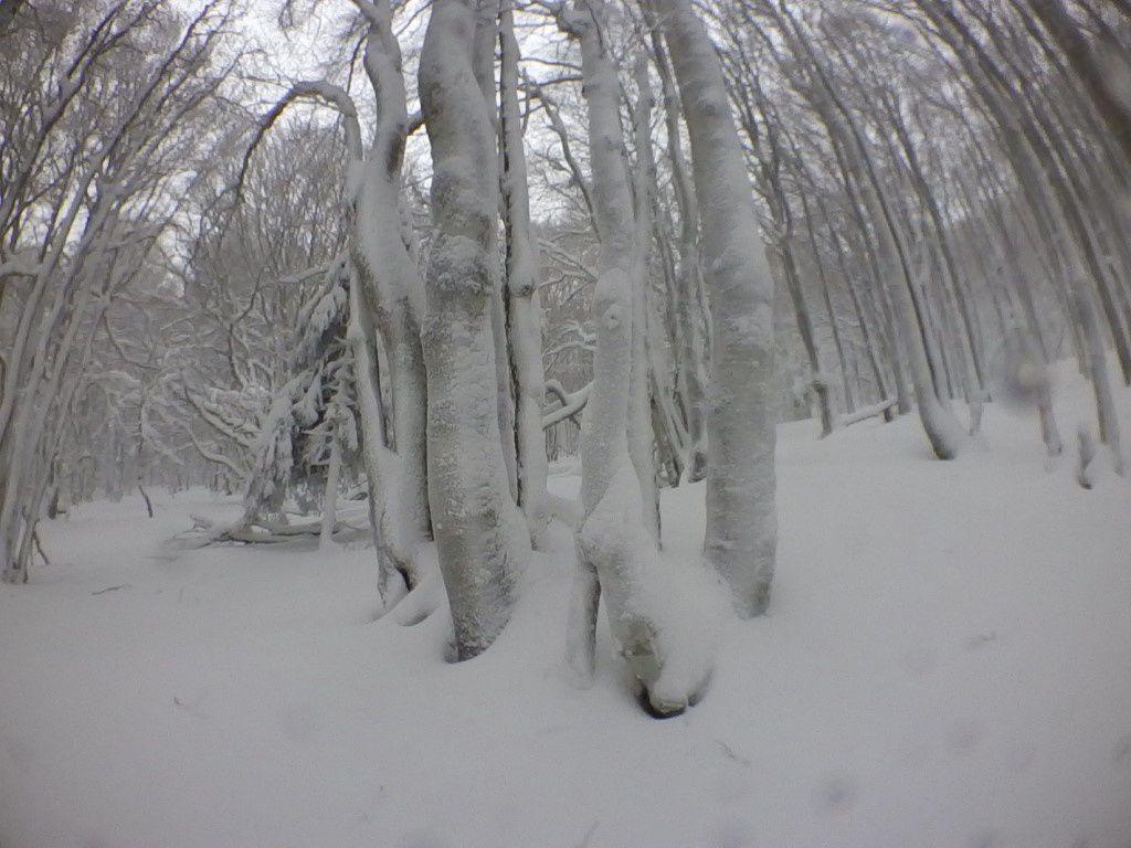 2019: Tempête... de neige