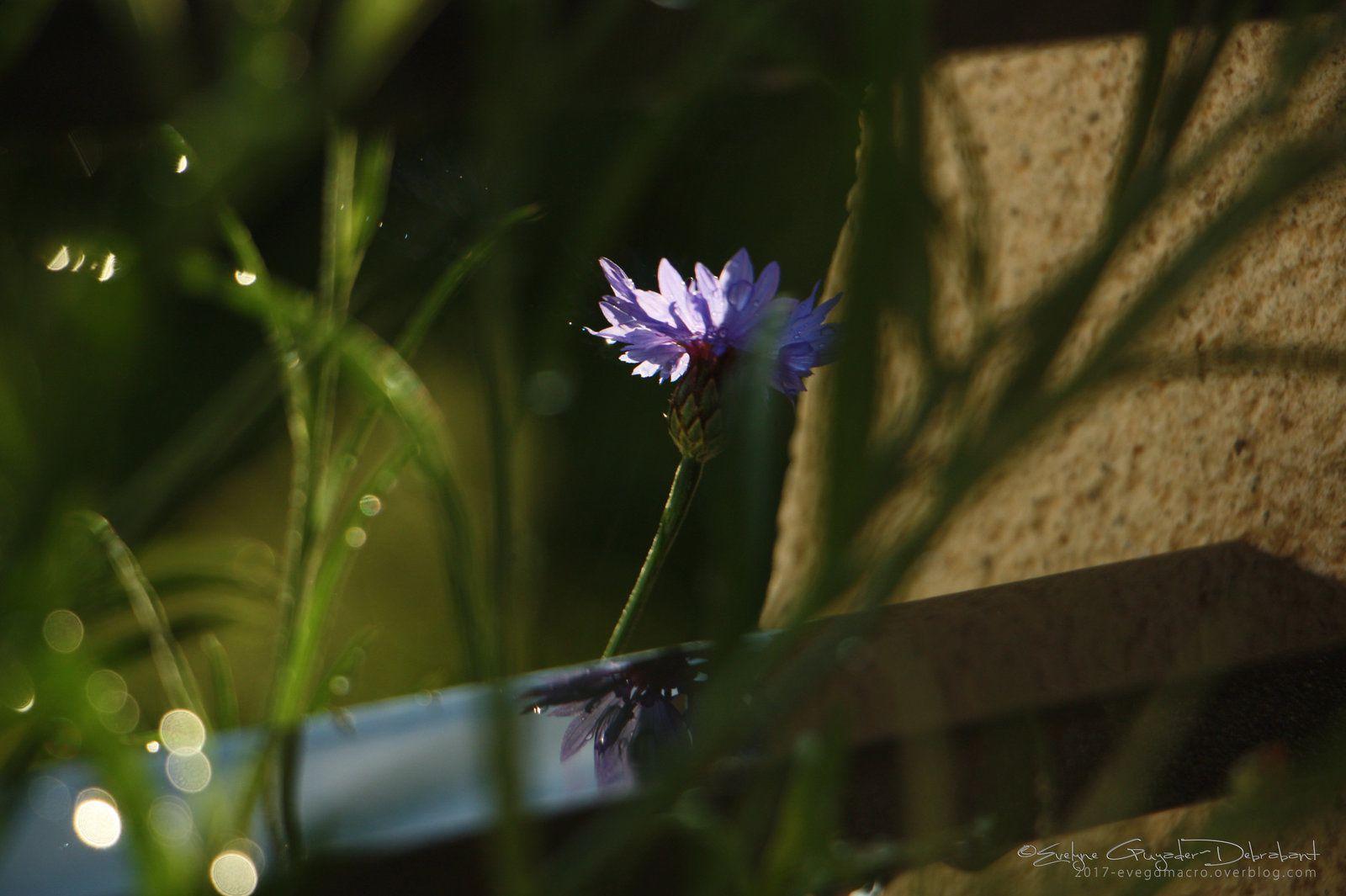 Je suis restée Fleur Bleue