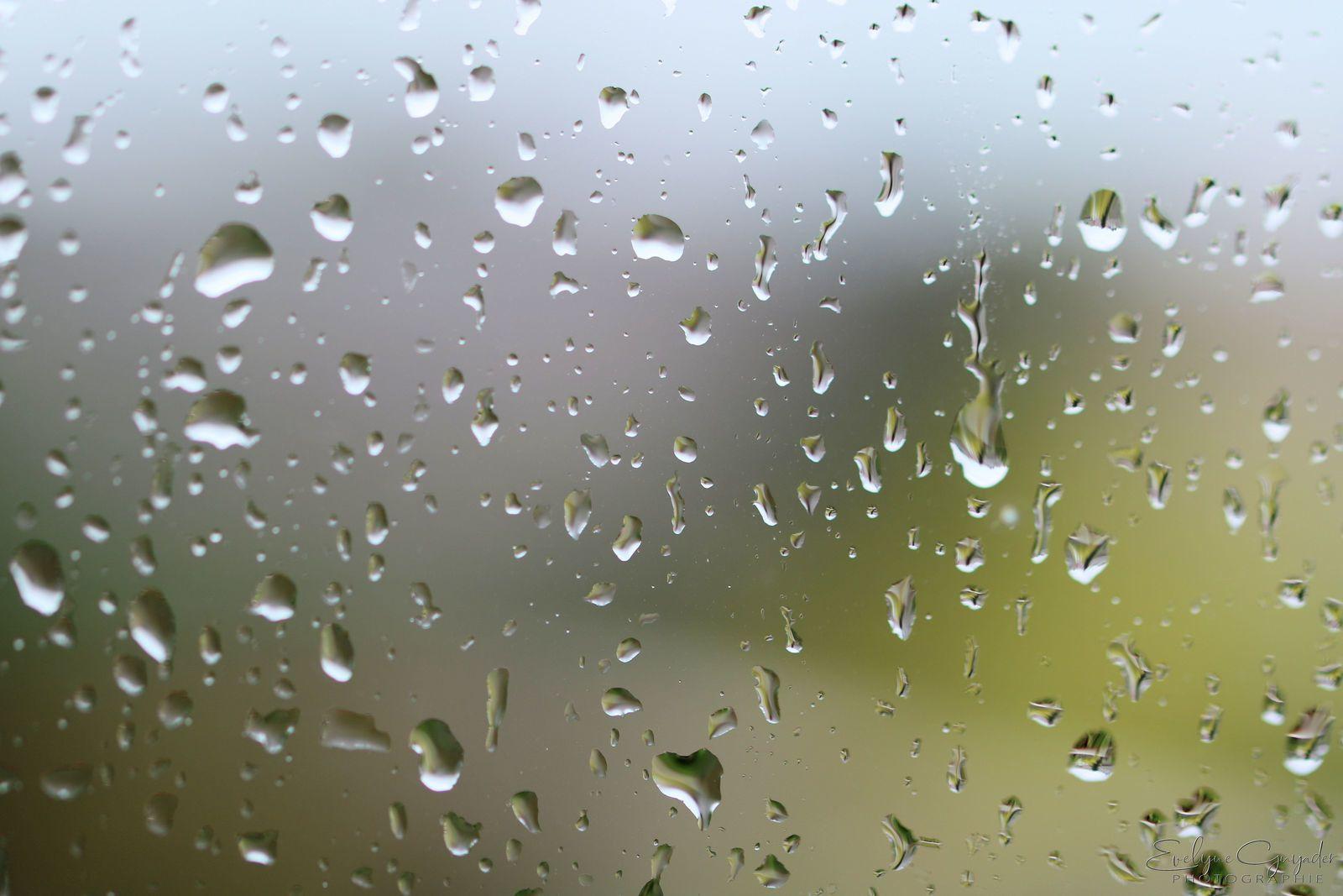 Ce n'est pas encore l'hiver, mais Sacha Distel aussi chantait sous la pluie !