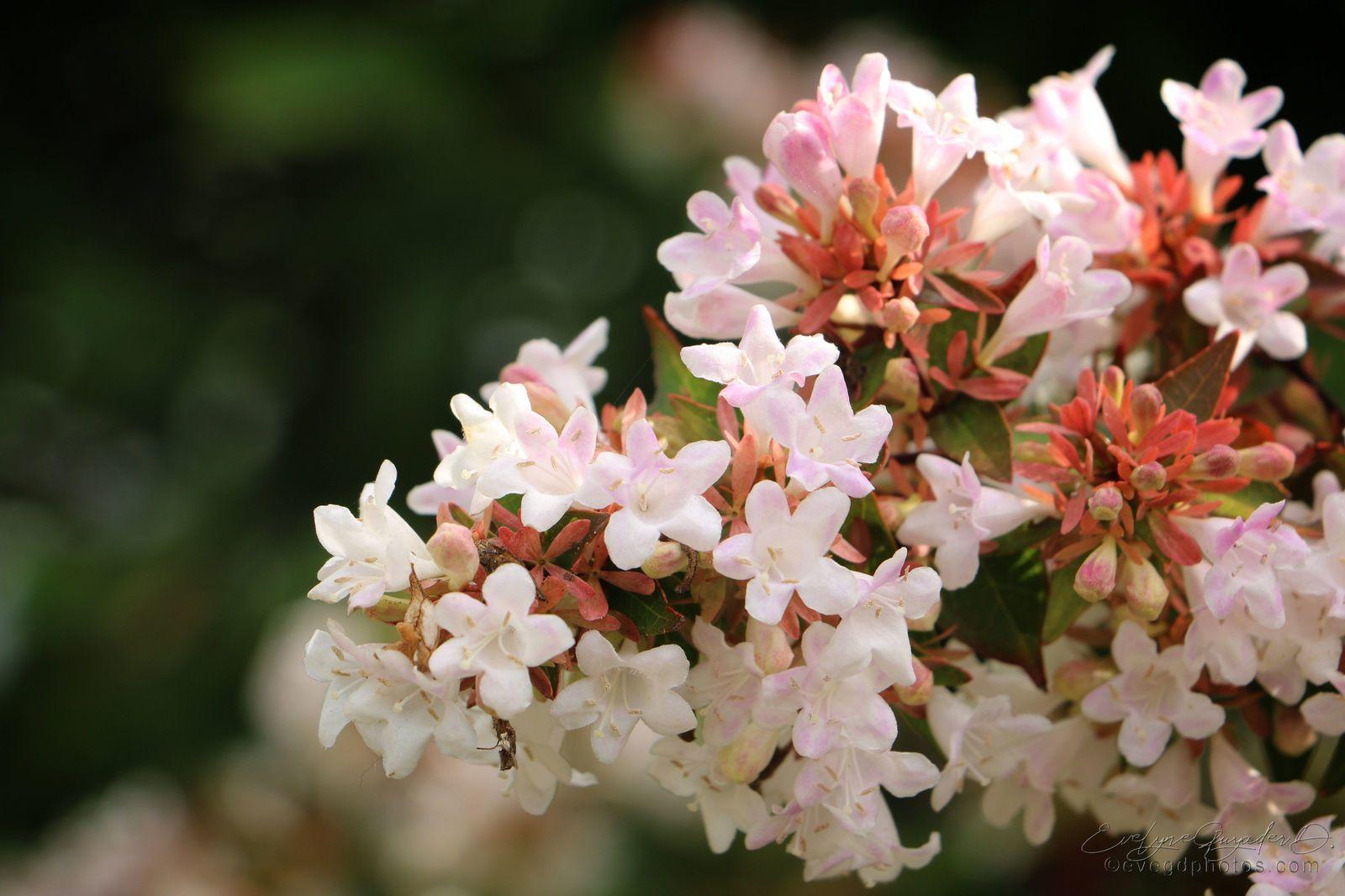 Des Fleurs et des Baies..