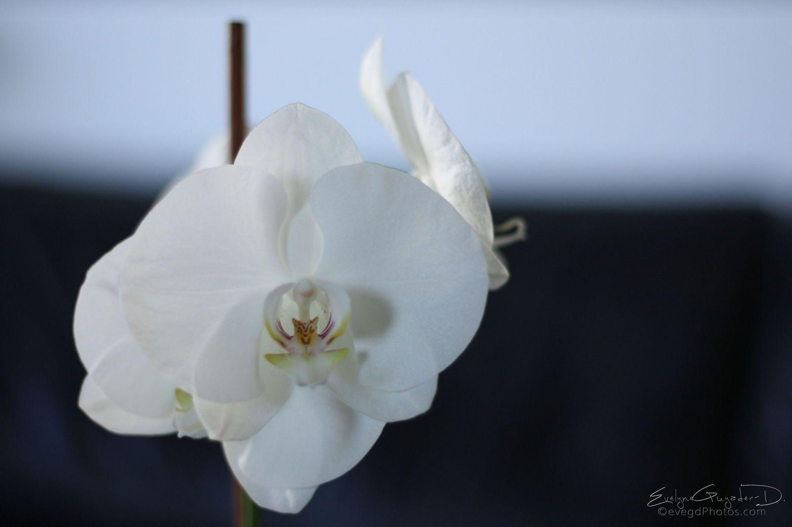 La blanche.. texturée, nature ou en noir et blanc..