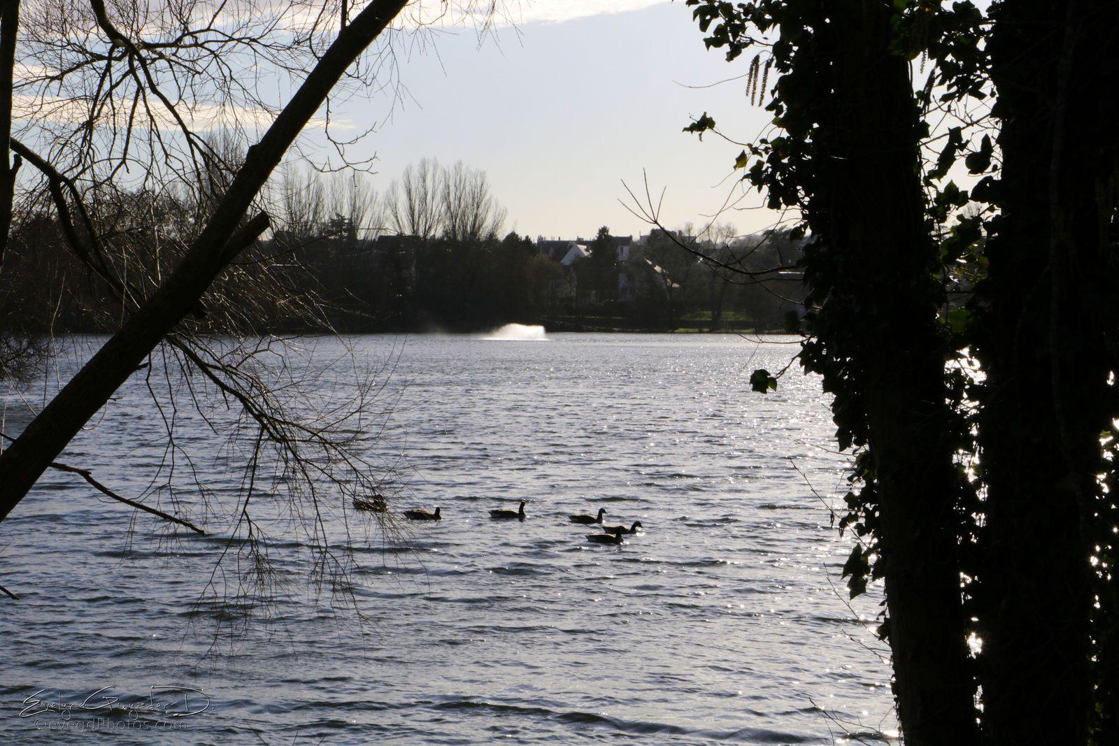 Au Lac de Gassicourt..
