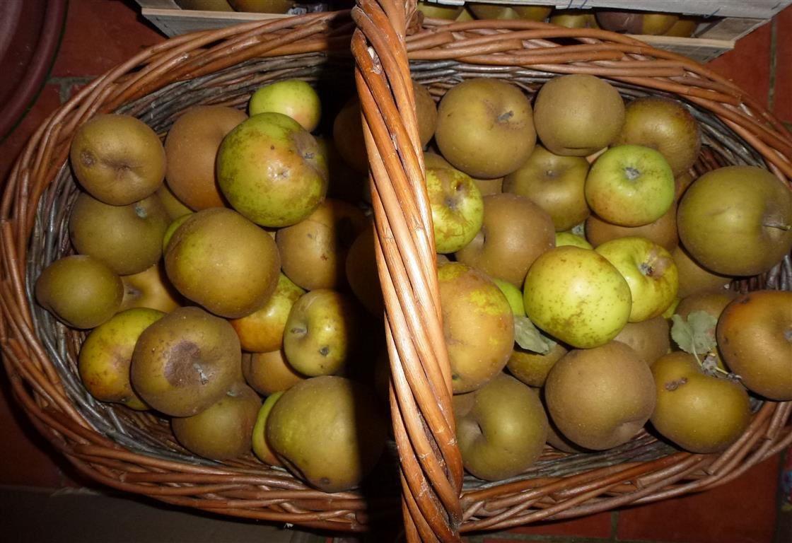 Compote de pommes et figues à la vanille