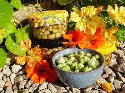 Câpres de capucine  (extrait du site : http://ecoute-les-fleurs.blogspot.fr/2010/10/les-capres-de-capucine.html)
