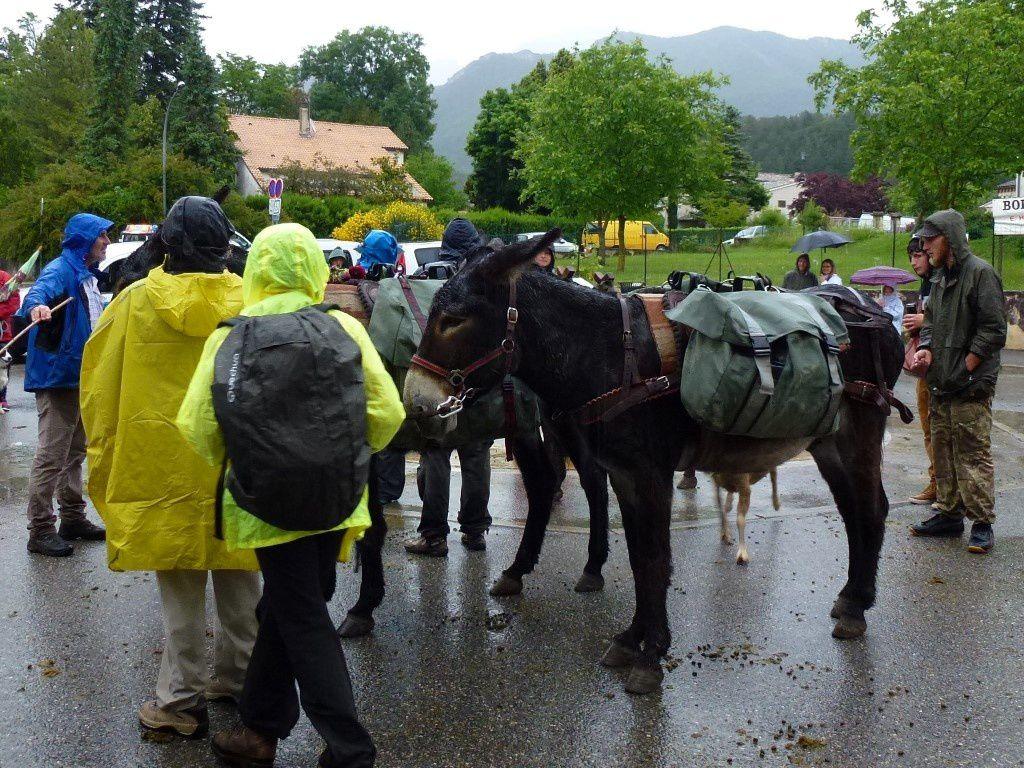 Les ânes qui suivent le troupeau...