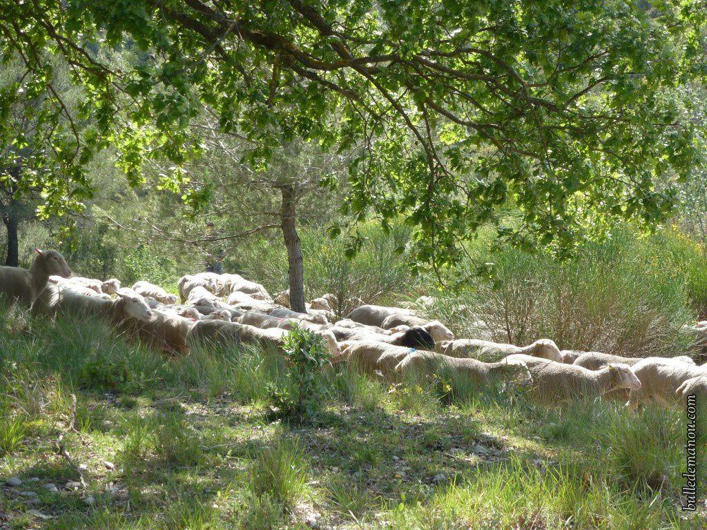 Voilà le troupeau vu de près