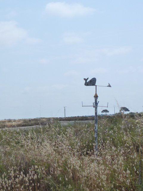En plein salin, une girouette indique d'où vient le vent...un élément du décor indispensable.