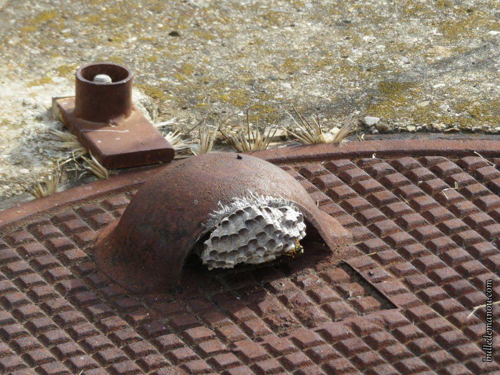 Un nid de guêpes sans doute