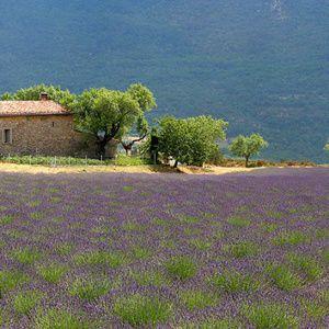 Visages de la Provence : petite mise à l'honneur de ses membres