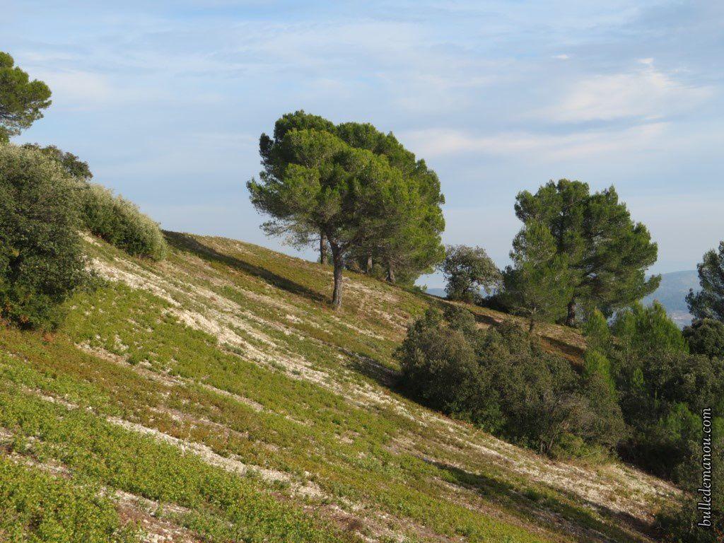 Les jours de soleil et de ciel bleu (Vernègues, chaîne des Côtes...)