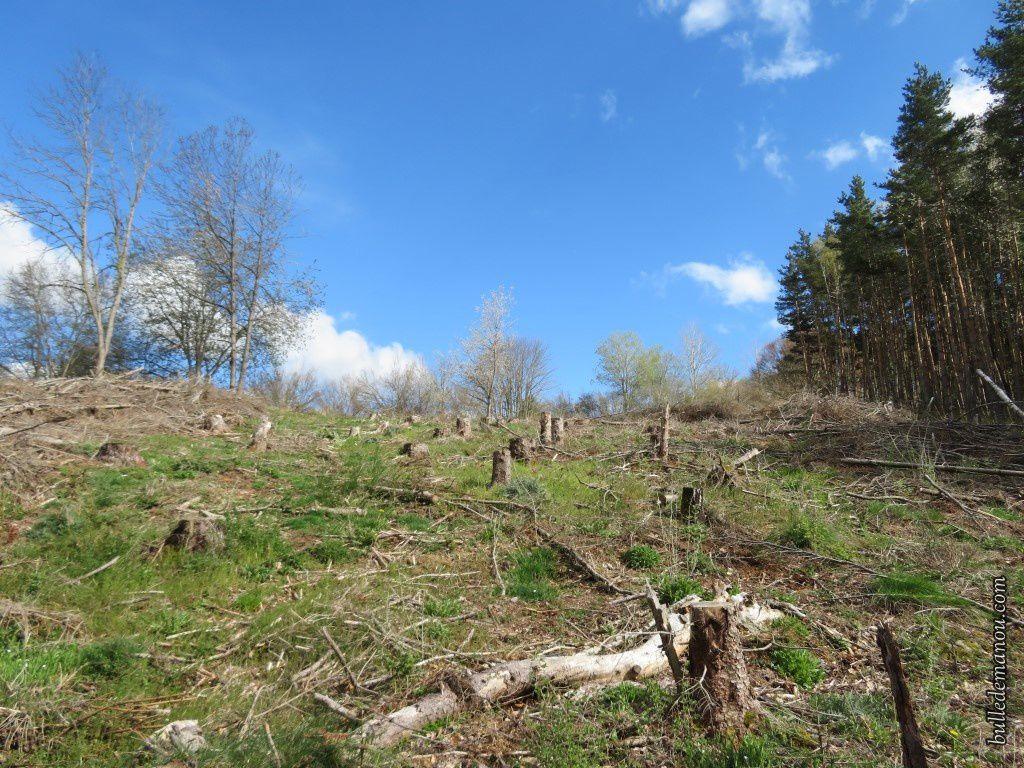 la forêt par endroit exploitée