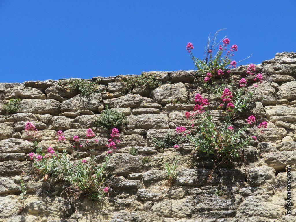 Les vestiges des remparts du XVIe...