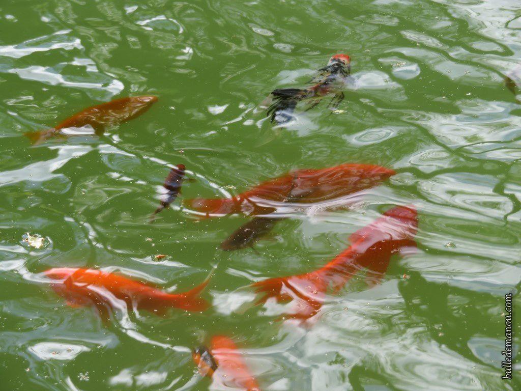 Le bassin de l'étang de Cucuron