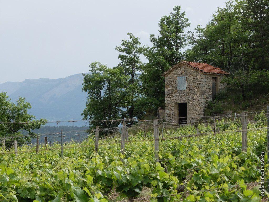 Un des cabanons de vigne de Châtillon