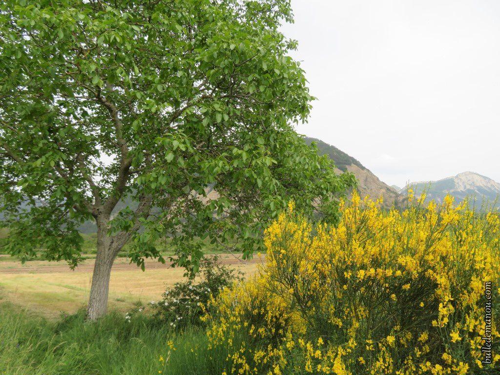 Les paysages autour des champs de vigne