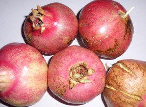 Les fruits de mon grenadier