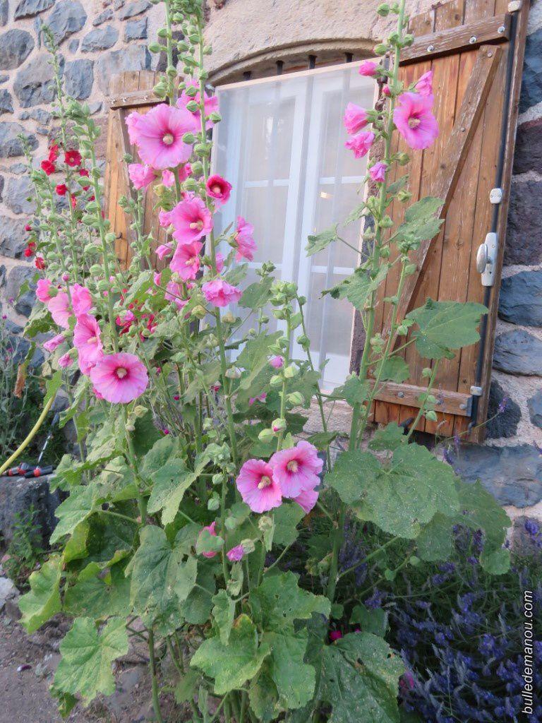 Quelques fleurs de mon jardin de Haute-Loire