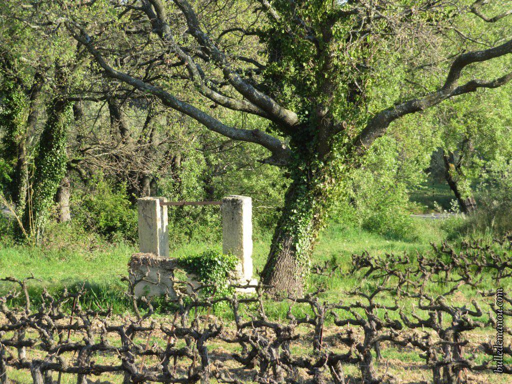 Le vieux puits isolé au milieu du champ de vigne