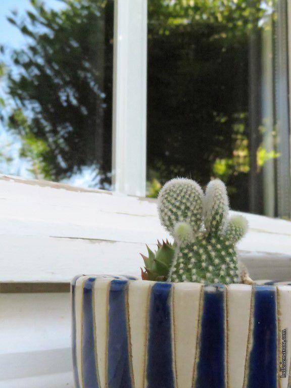 Un cactus en forme de raquette : un Opuntia