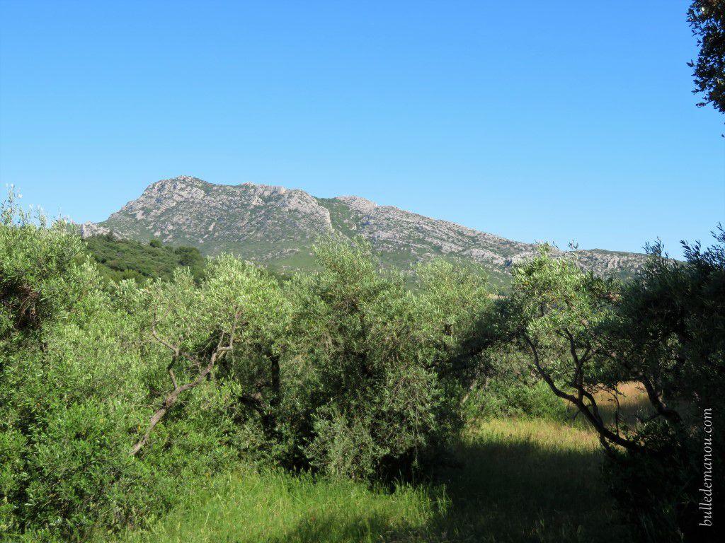 Les paysages avec les oliviers