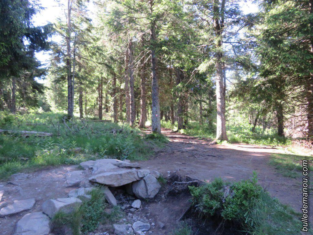 Le chemin grimpe dans la forêt