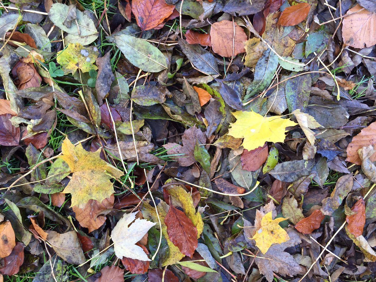 Méditation de la feuille d'automne