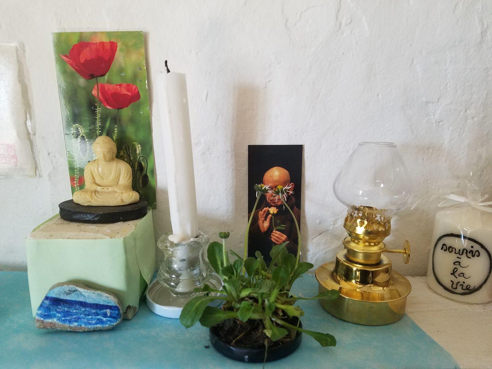 Petit Miracle:Ces Marguerites se tournent tout spontanément vers Thay!