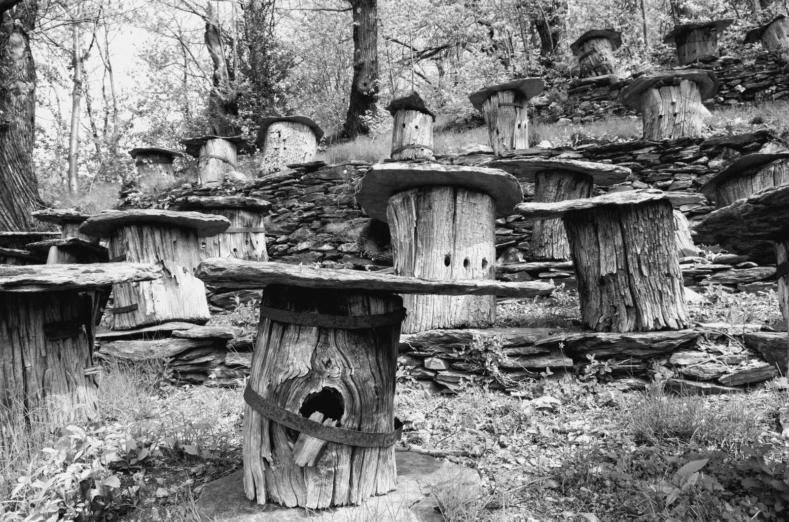 """La bonne vieille ruche en tronc de châtaigner et avec le """"cabussel"""" en """"laûze"""" (photos en noir et blanc)"""