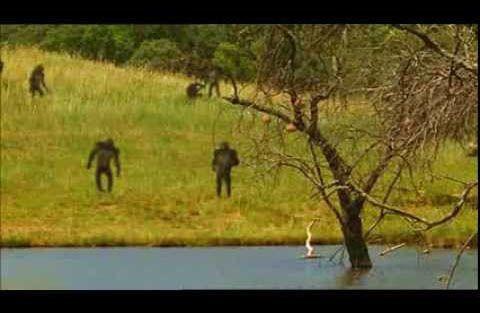 Comment les singes apprirent à marcher, d'après L'odyssée de l'espèce. Et tous les enfants au primaire regardent ce film…