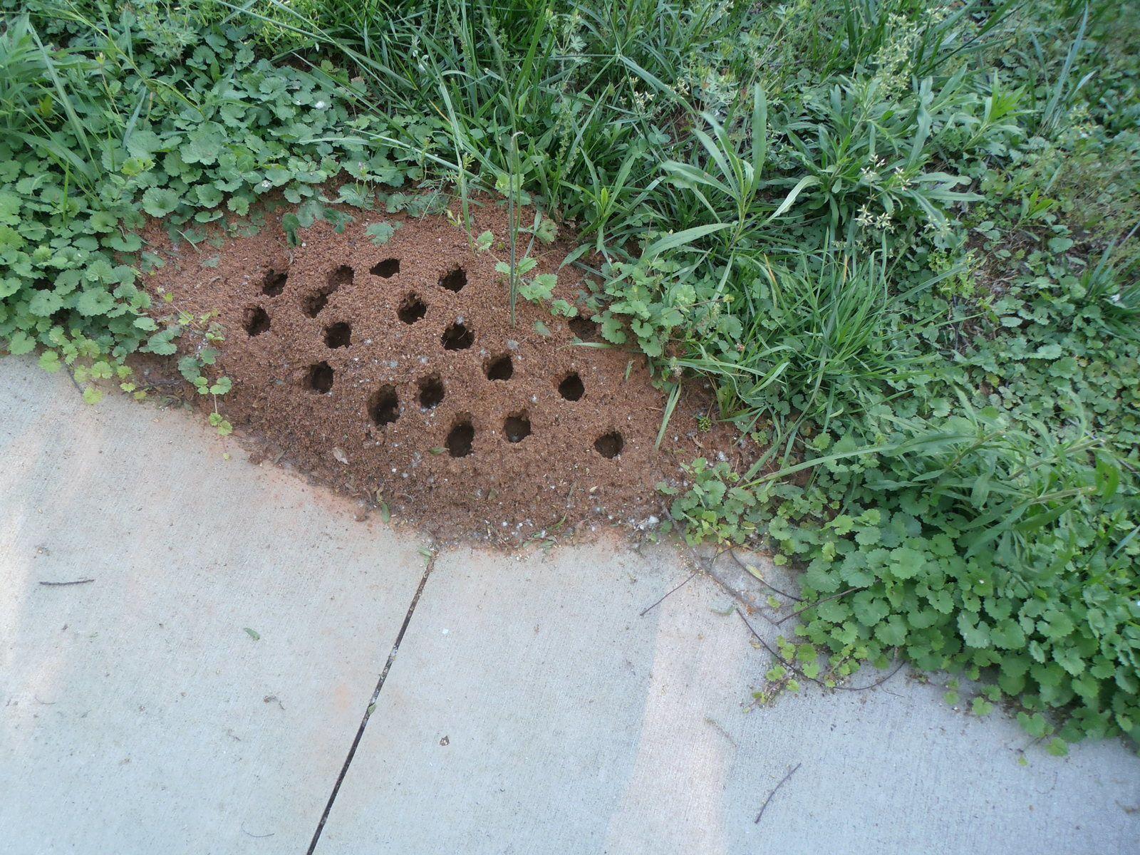 Quelques temps après, j'ai constaté qu'ils étaient perforés de trous circulaires. Quelqu'un aurait-il une explication ?