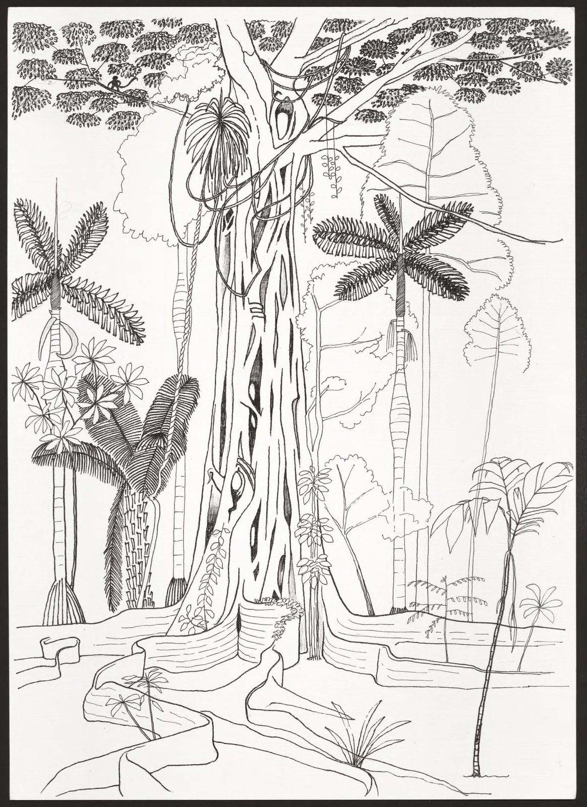 Francis Hallé Ficus étrangleur, forêt de Pakitza, Amazonie péruvienne, non daté Crayon et encre sur papier, 42 × 30 cm Collection de l'artiste © Francis Hallé
