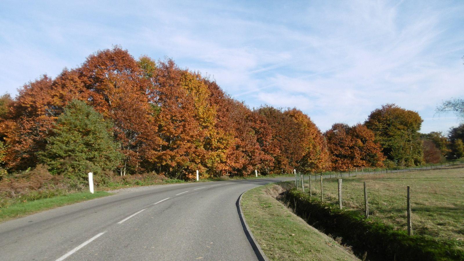 Routes d'automne